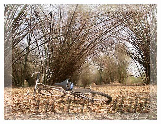 bike_b01.jpg