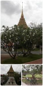 ใต้ต้นลั่นทม ก่อนเดินขึ้นพระพุทธบาท สระบุรี