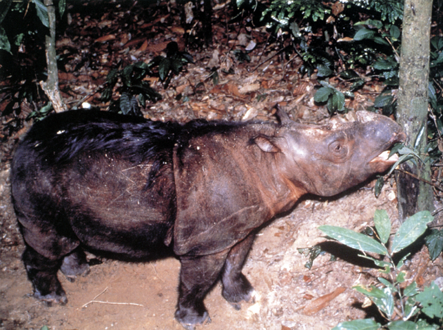 http://www.sarakadee.com/feature/1999/11/images/rhino_pict2.jpg