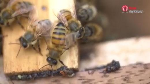 """Teaser – """"น้ำผึ้ง มหัศจรรย์ความหวานจากแมลงตัวจิ๋ว"""""""