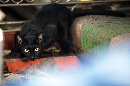 โลกของแมวชำรุด