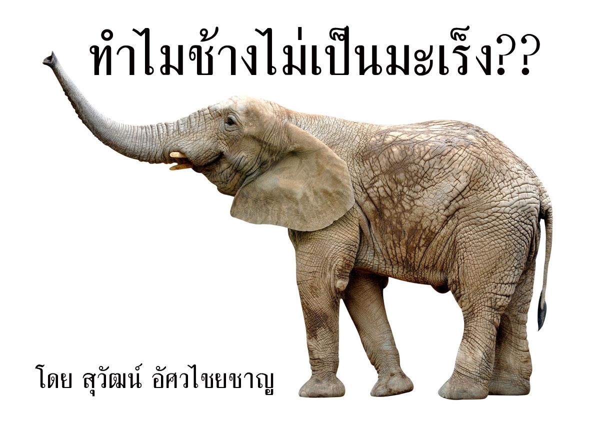 พุธ-ไซแอนซ์ –  ทำไมช้างไม่เป็นมะเร็ง??