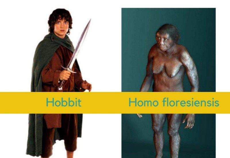 """พุธ-ไซแอนซ์ –  """"ฮอบบิต"""" มนุษย์จิ๋วตัวจริงที่ไม่ใช่มนุษย์กลายพันธุ์"""