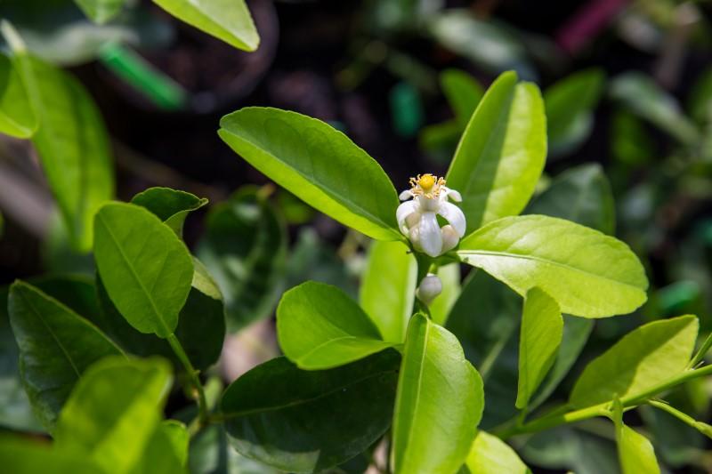 limegarden07
