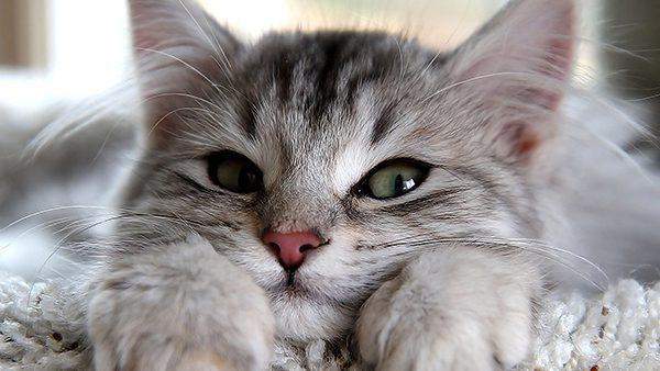 โลกสองด้านของน้องแมว - ONE TON