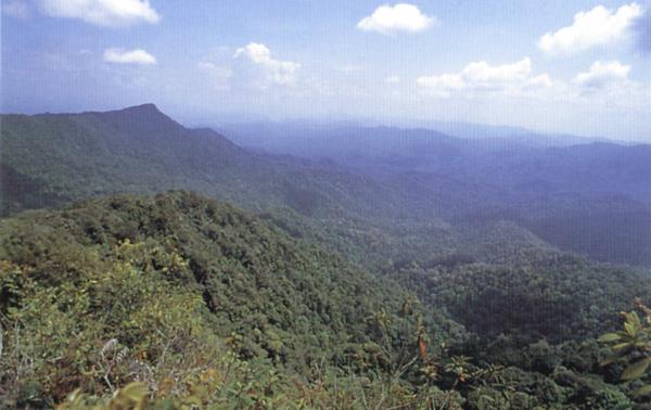 ป่าดิบบริเวณชายแดน ไทย- มาเลเซีย เป็นบริเวณที่ สันนิฐานว่า มีกระซู่อาศัยอยู่