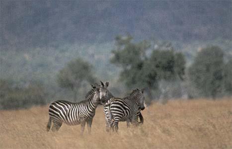 safari 02