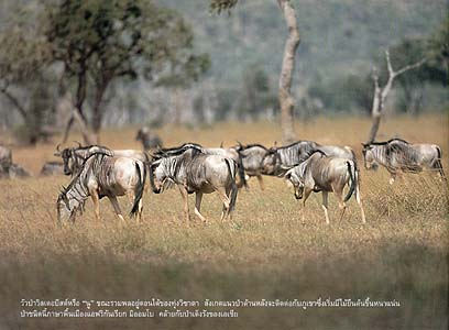 safari 04
