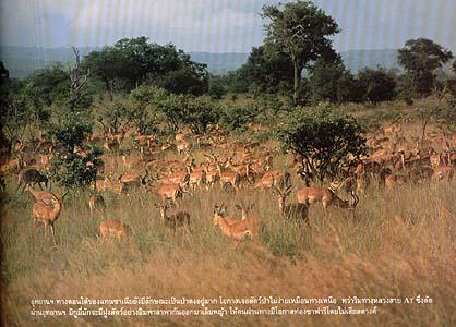 safari 06