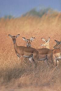 safari 07