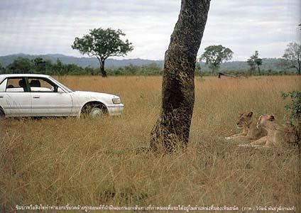 safari 08
