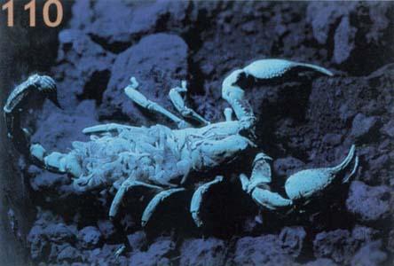 scorpions 01