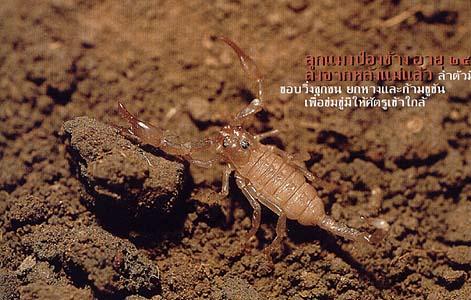 scorpions 05