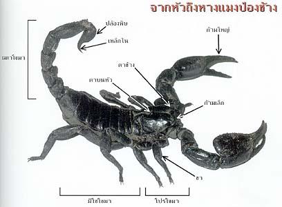 scorpions 07