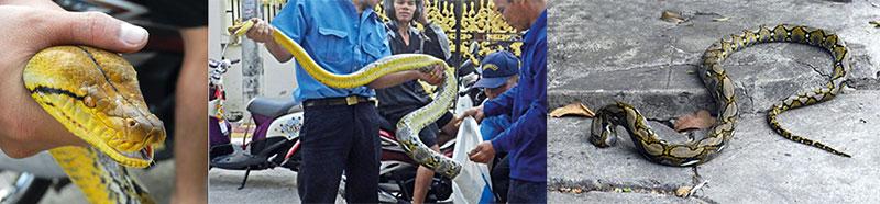 snake04