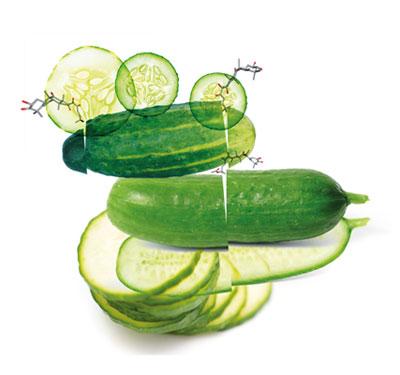108-cucumber