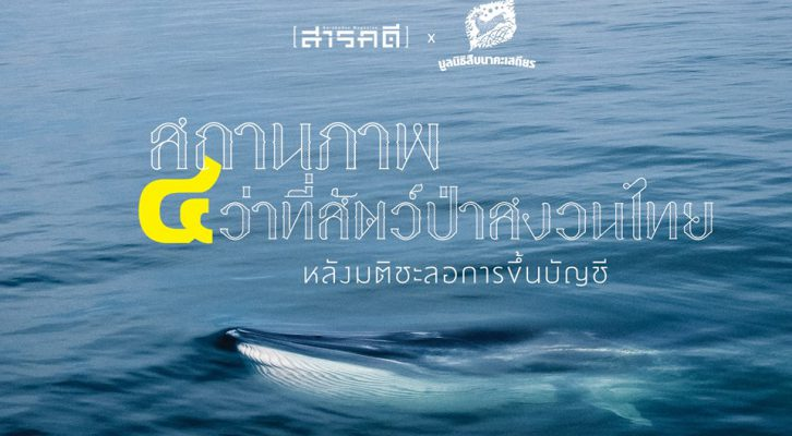 """สถานภาพ """"๔ ว่าที่สัตว์ป่าสงวนไทย"""" วาฬบรูด้า วาฬโอมูระ ฉลามวาฬ เต่ามะเฟือง หลังมติชะลอการขึ้นบัญชี"""