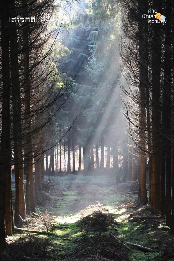 bigforest03