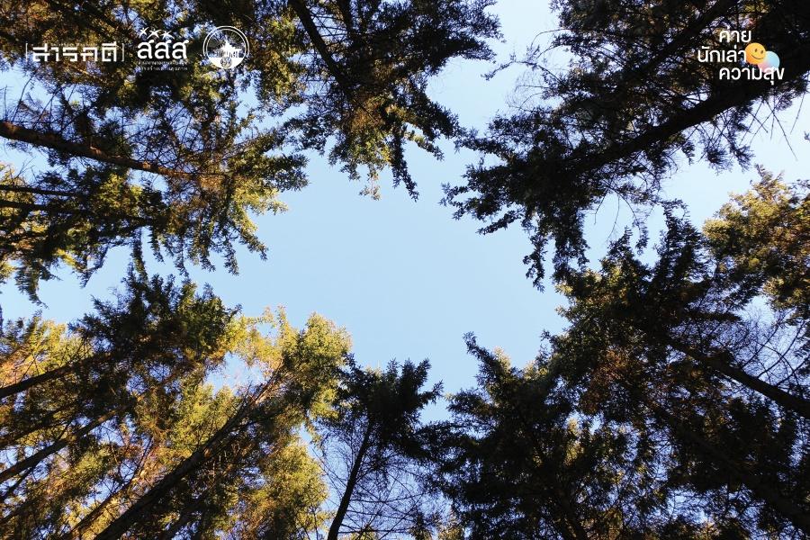 bigforest12