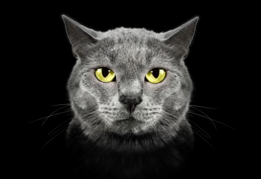 แพะในร่างแมวดำ กับคำพิพากษานอกบัลลังก์