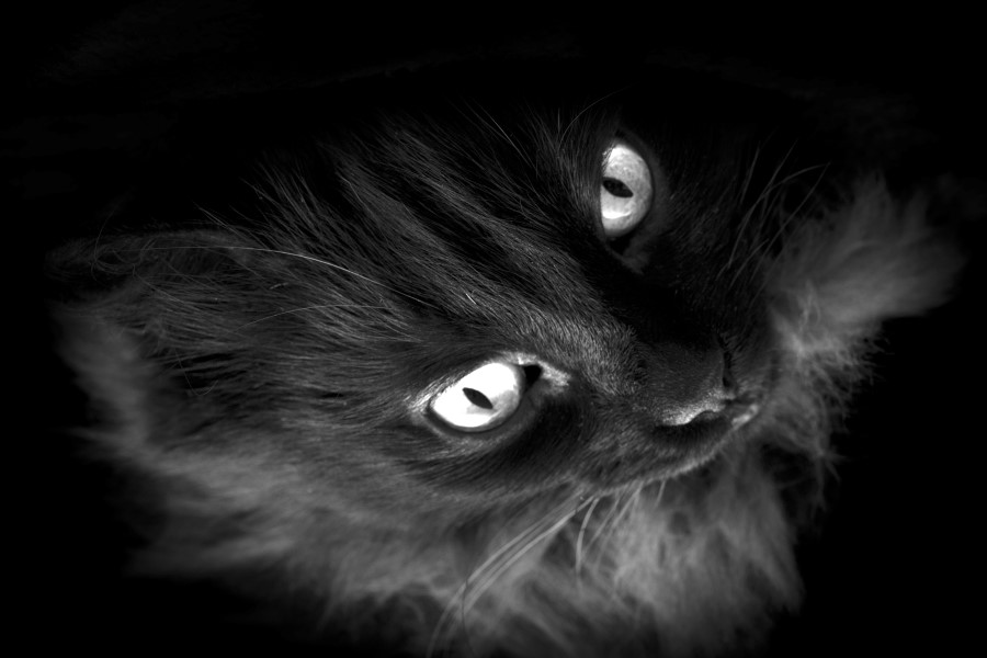 blackcat02