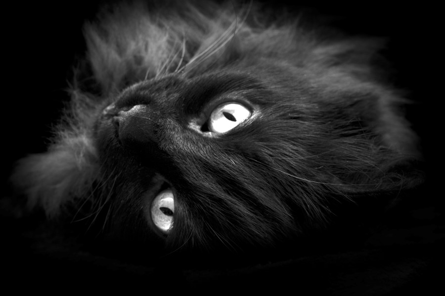 blackcat03