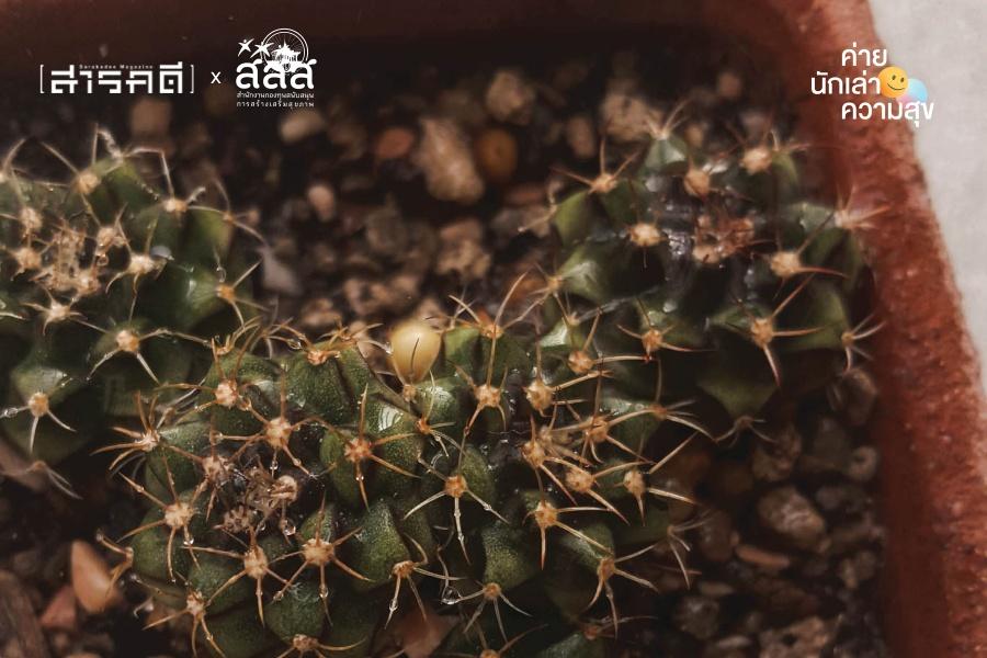cactus004