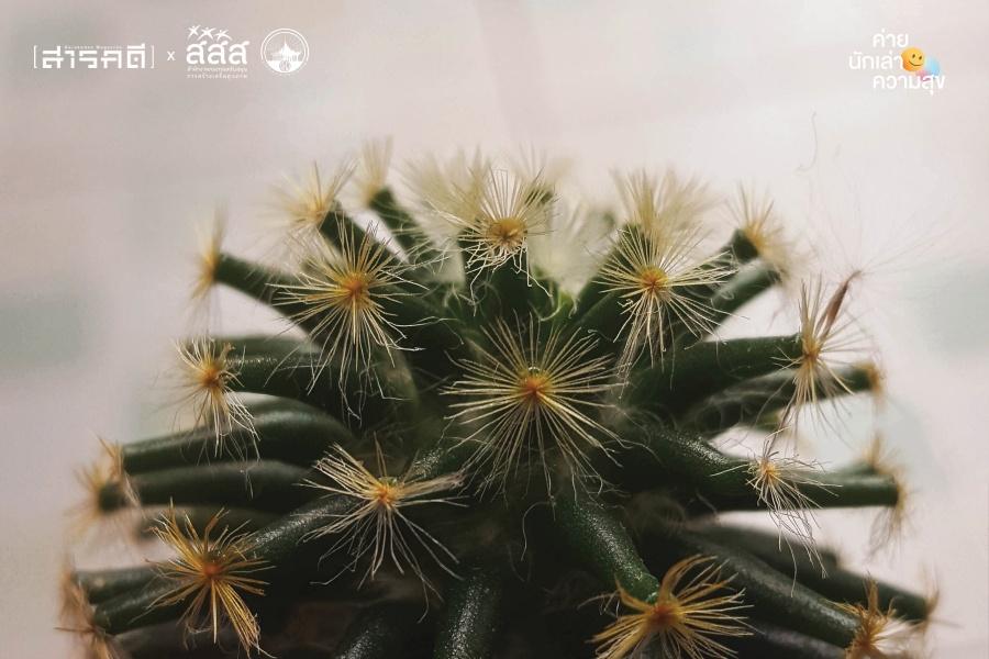 cactus006