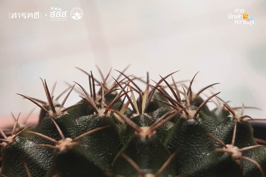 cactus007