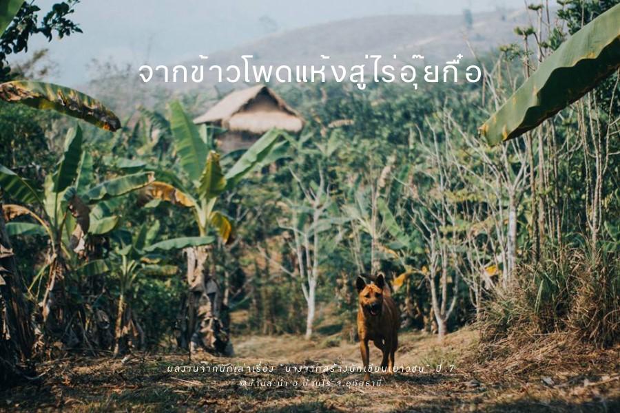 cornfield01