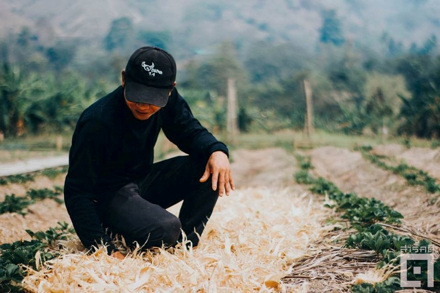 cornfield07