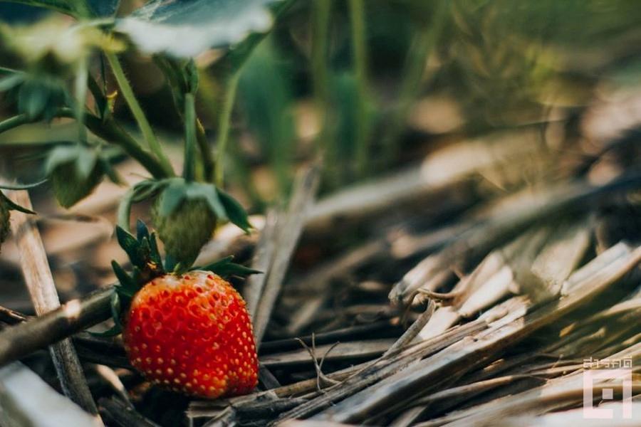cornfield08