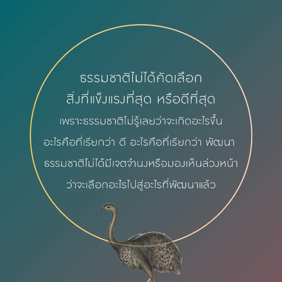 darwin 12