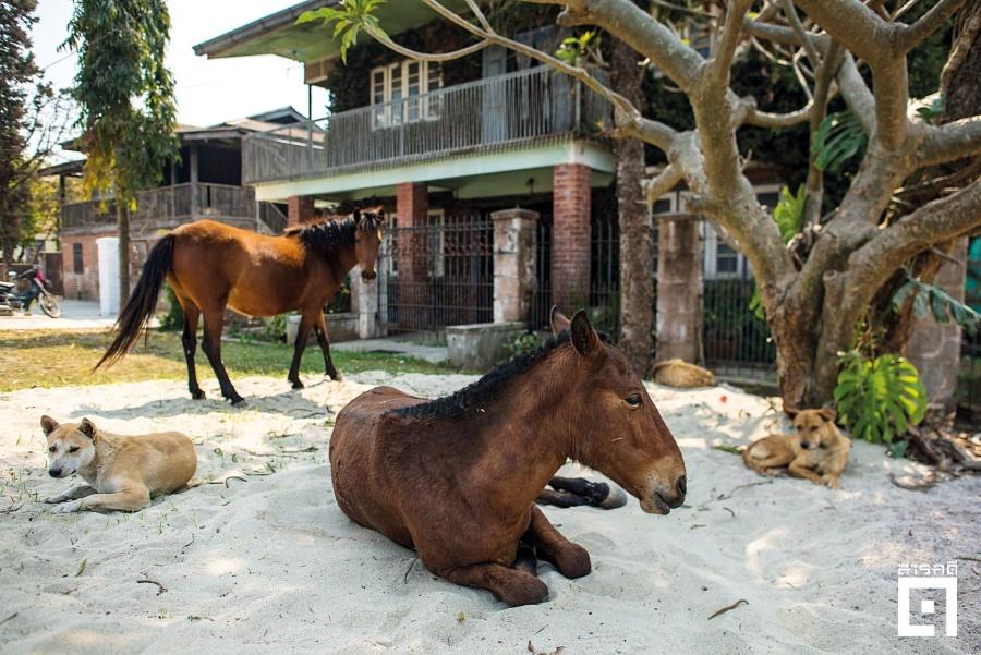 horsecar09 1