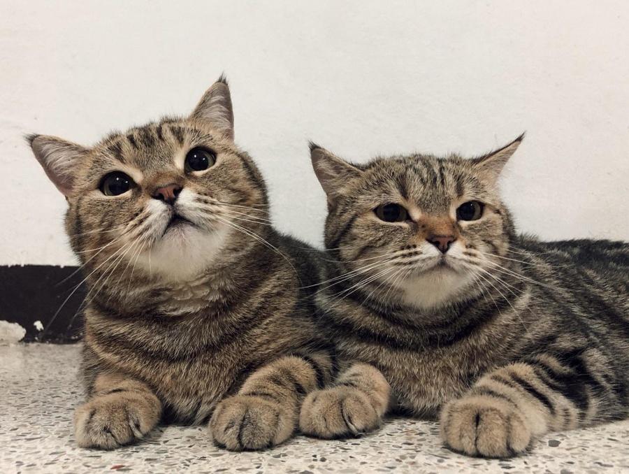 เรื่อง แมว แมว