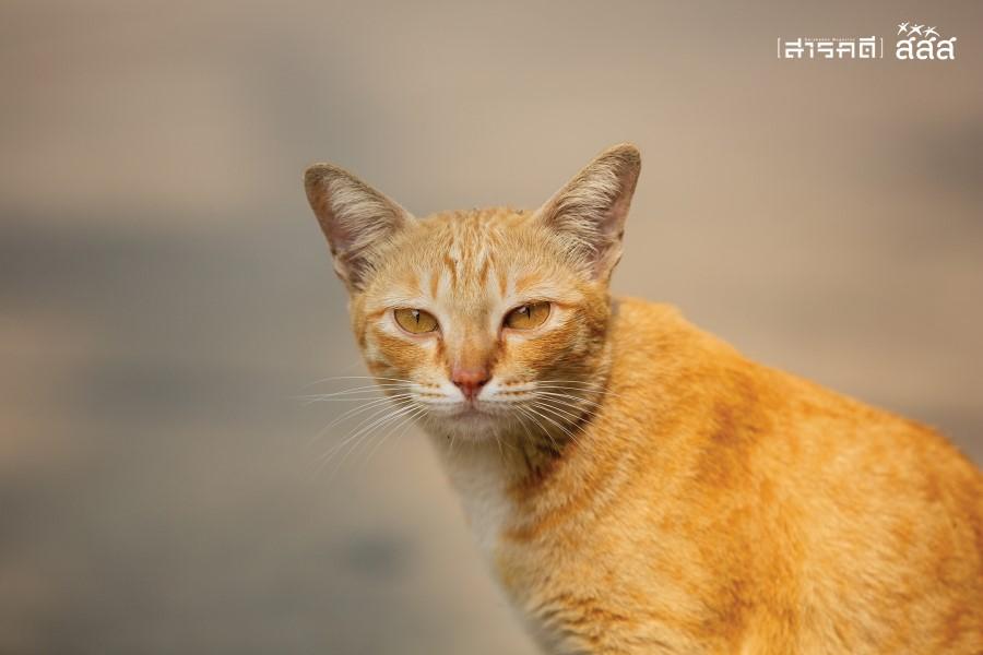 แววตาของแมวจรในหมู่บ้าน มีความคาดหวังถึงอาหารและก็ระแวงไปด้วย เพราะชีวิตแมวจรต้องต่อสู้กับอะไรอีกมากมายในการดำรงชีวิต