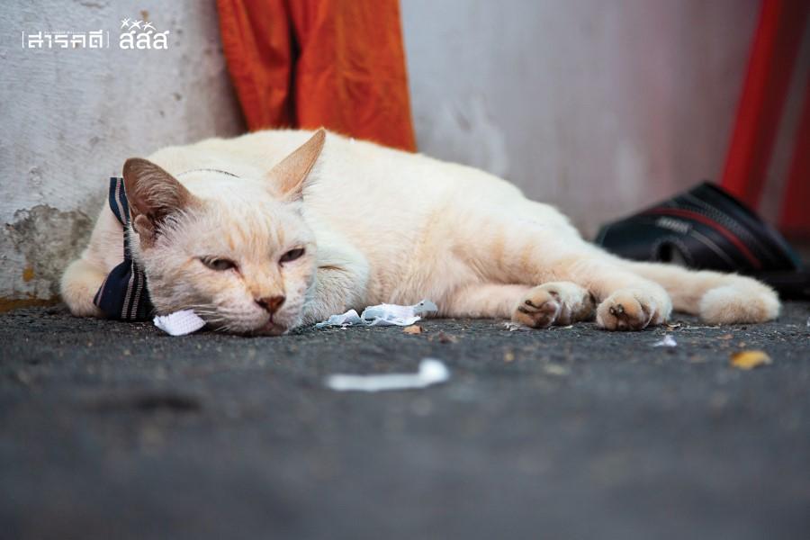 ชีวิตแมวจร ไม่มีที่นอนอุ่นๆ ไม่มีอาหารครบทุกมื้อ แค่ได้นอนหลับอย่างสบาย ไม่มีใครรบกวน ก็ถือว่าดีที่สุดแล้ววันนี้