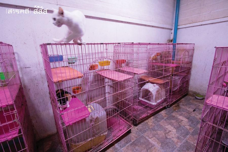 นึ่งในห้องแมวที่คุณยิ้มทำไว้เพื่อแมวจรที่บ้าน ซึ่งห้องแมวกินพื้นที่บ้านชั้นล่างเกือบหมด และติดแอร์ให้ทุกห้อง ทุกตัวจะมีคอนโดฯ เป็นของตัวเอง
