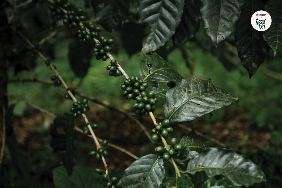 naturalcoffee04