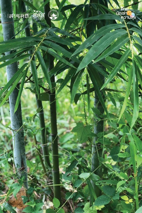 ป่าไผ่ - ทำใจ…ในป่าสุข