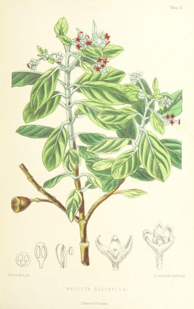 perfumebeaux04