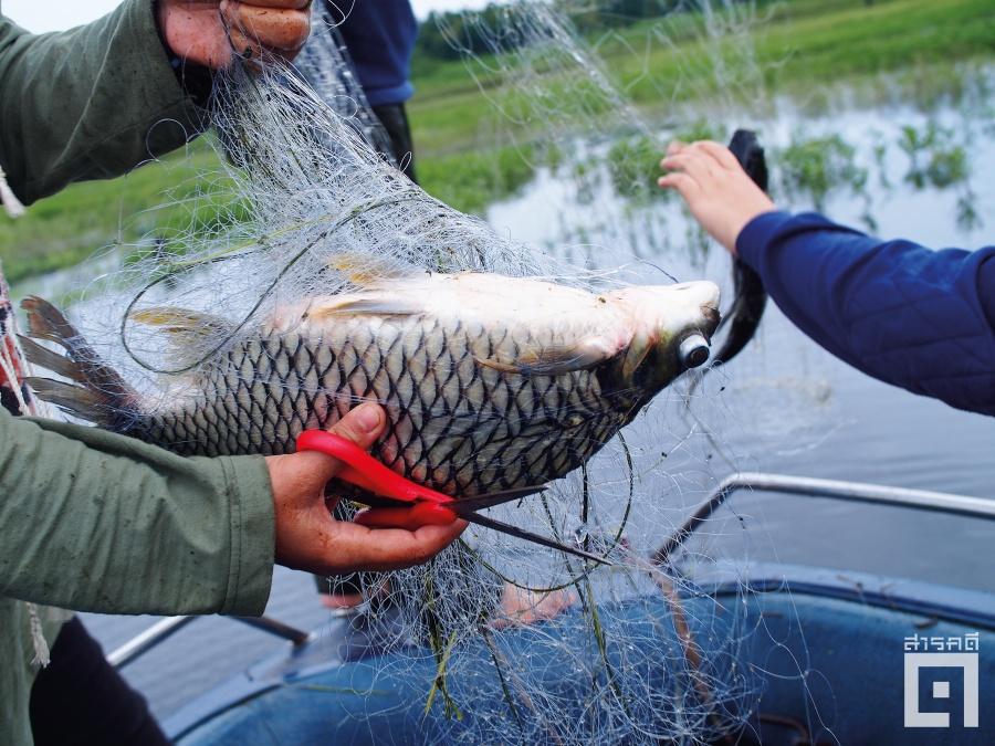 redwaterfish01