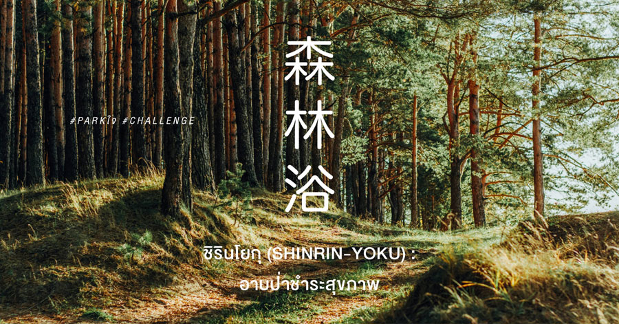 ชิรินโยกุ (Shinrin yoku) : อาบป่าชำระสุขภาพ