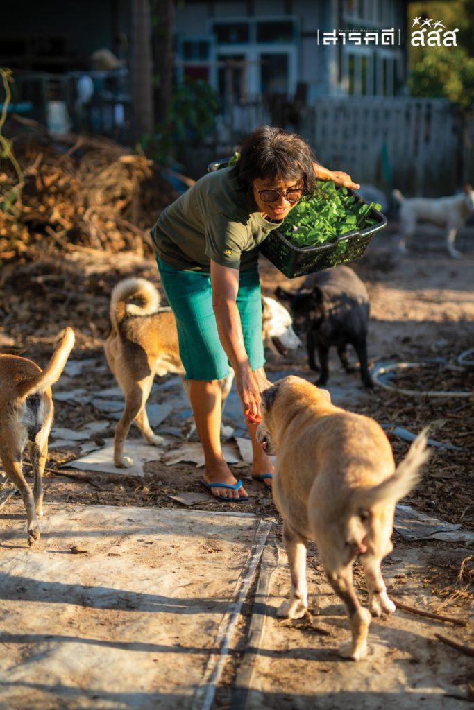 เหล่าสุนัขจรจัดที่ต้องตาเก็บมาเลี้ยงในสวนพากันวิ่งเล่นอย่างสนุกสนาน เมื่อต้องตาเดินผ่านก็จะคอยวิ่งเข้ามาล้อมตัวและเดินไปด้วยตลอดทาง