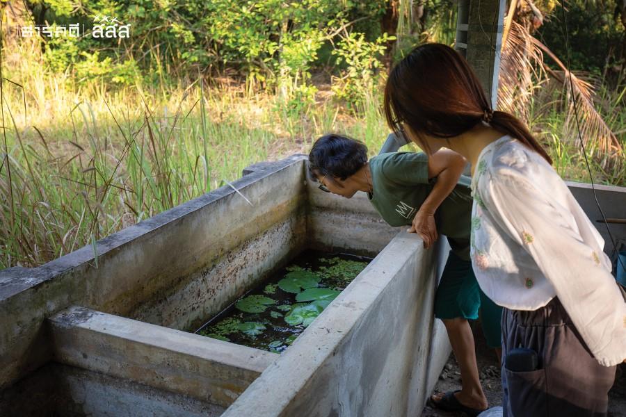 """""""ปีนี้น้ำแล้งมาก ปรกติน้ำในบ่อไม่เคยลดต่ำขนาดนี้"""" ต้องตากล่าวระหว่างพาพวกเราดูบ่อน้ำที่ใช้เลี้ยงสาหร่าย อาหารปลาดุกในบ่อ"""