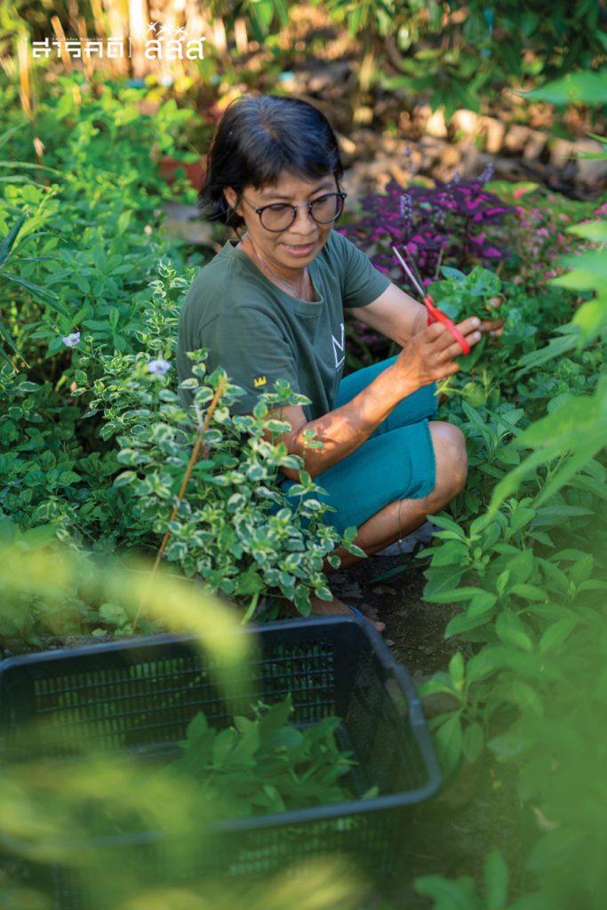 ต้องตากำลังเลือกเก็บผักและสมุนไพรภายในสวน เพื่อนำไปทำน้ำปั่น