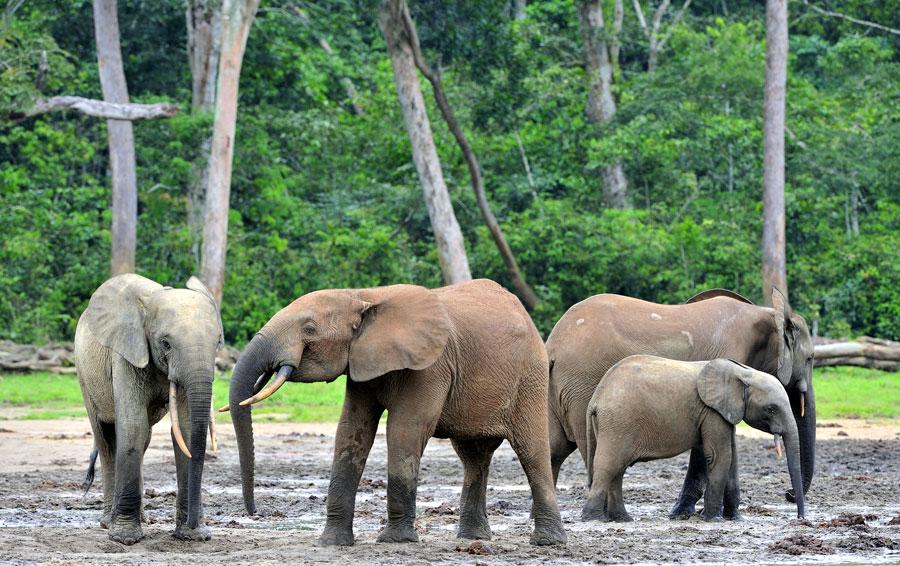 third elephant02