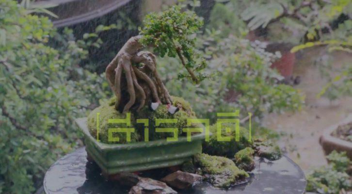 มหัศจรรย์ต้นไม้ XS บนโลกมินิมอล
