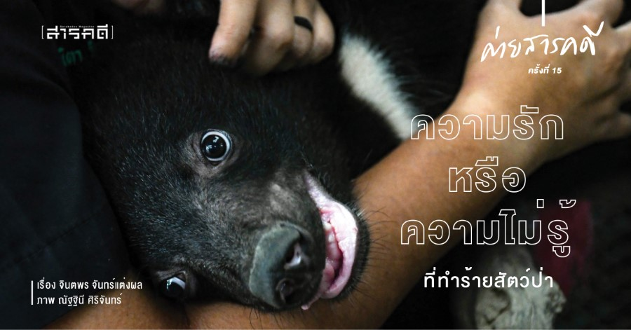 ความรักหรือความไม่รู้ที่ทำร้ายสัตว์ป่า